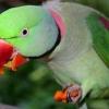 10 Найкрасивіших папуг в світі