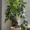 5 Кімнатних рослин ефективно очищають повітря