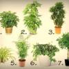 7 Кращих рослин для очищення повітря