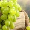 Білий виноград: користь і шкода