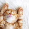 Чого ще ми не знали про кішок