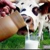 Що таке незбиране молоко?