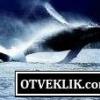 Що означає, якщо приснився кит?