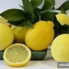 Як приготувати напій з медом і лимоном?