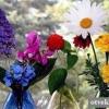 Який у вас квітка-талісман?