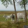Ким представлений тваринний світ регіону ханшаг в парку ферте-ханшаг?