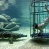 «Клітка смерті» в парку «крокодиляча бухта»