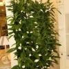 Красиві кімнатні рослини