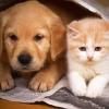 Хто розумніший, коти або собаки?