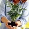 Чи може рослина впливати на поведінку людини?