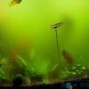 Мутніє вода в акваріумі