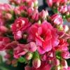 Невибагливі рослини для тих, у кого немає часу