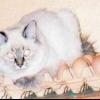 Відсутня материнський інстинкт у кішки. Що робити?