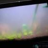 Чому вода в акваріумі стає каламутною.