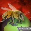 Чому вимирають бджоли і чим це загрожує?