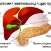 Допоможемо жовчному міхурі і печінці