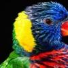 Папуга падає з жердочки