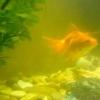 Псується вода в акваріумі. Причини та рішення.