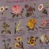 Символ квітів