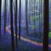 Синій, за рахунок дзвіночків, ліс в бельгії
