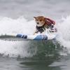 Собачий серфінг в каліфорнії 2015