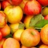 Соковижималка для яблук великої продуктивності
