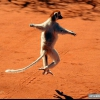 Танцюючі тварини