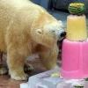Торт з риби, фруктів і льоду порадували ведмедя в день народження