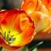Вальс квітів: даруйте коханим радість