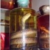 Зміїне вино